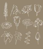 Different flowers vector collection Royalty Free Stock Image
