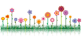 Different flowers - Vector image Royalty Free Stock Images