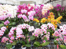 The different flowrs in orchid garden Stock Photo