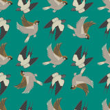 Different flying birds seamless pattern vector illustration. Stock Image