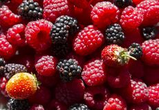 Different forest fruits Royalty Free Stock Image