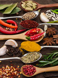 Different fragrant spices Stock Image