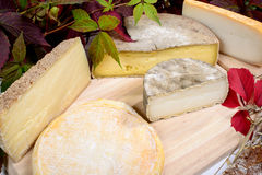 Different french cheeses produced in the Alps mountains Royalty Free Stock Photos