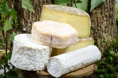 Different french cheeses Stock Photography