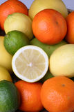Different fresh citrus fruit Stock Image