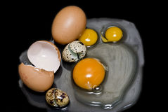 Different fresh eggs for an omelet Stock Images