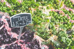 Different fresh green herbs on market outdoor summer in Copenhagen, Denmark. Royalty Free Stock Photography