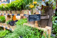 Different fresh green herbs on market outdoor summer in Copenhagen, Denmark. Royalty Free Stock Photography