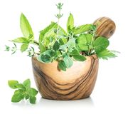 Different fresh green herbs in the wooden mortar. Stock Images