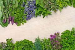 Different fresh herbs Stock Image