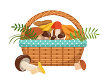 Different fresh mushrooms in basket. Vector illustrations set in cartoon style Royalty Free Stock Photos