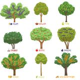 Different fruit trees sorts with names set, garden trees and berry bushes vector Illustrations Royalty Free Stock Photography