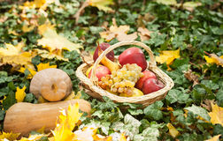 Different fruits and vegetables in basket on green grass. Autumn harvest vegetables outdoor (grapes, apples, pumpkin) Stock Photo