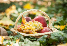 Different fruits and vegetables in basket on green grass. Autumn harvest vegetables outdoor (grapes, apples, pumpkin) Royalty Free Stock Photography