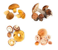 Different fungi decomposed into four piles Stock Image