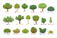 Different garden berry shrubs sorts with names set, fruit trees and berry bushes vector Illustrations. On a white background royalty free illustration