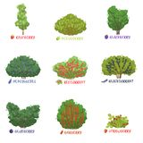 Different garden berry shrubs sorts with names set, fruit trees and berry bushes vector Illustrations. On a white background Royalty Free Stock Photo