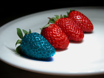 Different  - genetically modified food. Different than the rest - alone - blue strawberry. Concept for genetically modified food Stock Images