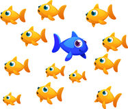 Different goldfish. A blue goldfish going in a diffrent direction that the common goldfish Stock Images