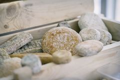 Different grades of delicious delicacy aged cheese with mold in wooden box. Gastronomic dainty products on market. Different grades of delicious delicacy aged stock photos