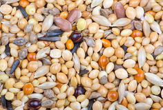 Different grains macro background Royalty Free Stock Photography