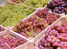 Different grapes in a wooden box Stock Image