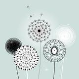 Beautiful dandelions Royalty Free Stock Images