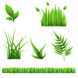 Different grass and leaves isolated on white background Stock Photography