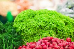Shelf with different green vegetables. Different green vegetables on the supermarket shelf Royalty Free Stock Images