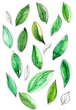 Different green watercolor leaves on a white background. With very impressive black and clear graphics on top of the drawing. Separate elements, can be used Royalty Free Stock Image