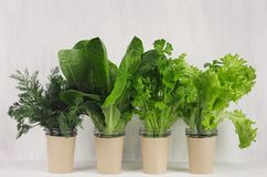 Different greens plant for salad in pots on white wooden background. Modern kitchen interior. royalty free stock images