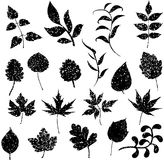 Different grunge leafs vector Stock Photos