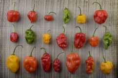 Different Habanero Chilis Royalty Free Stock Photography