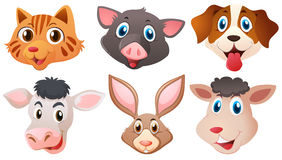 Different heads of cute animals Stock Images