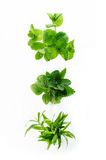 Different Herbs Royalty Free Stock Photos