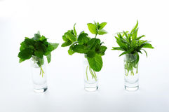 Different herbs Stock Image