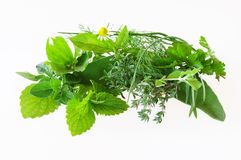 Different herbs Royalty Free Stock Image