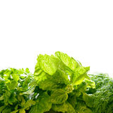 Different herbs foor cooking. On white background royalty free stock photo