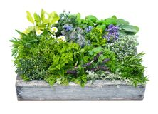 Different herbs in garden box Royalty Free Stock Photography