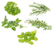 Different Herbs isolated on white. Background royalty free stock photo