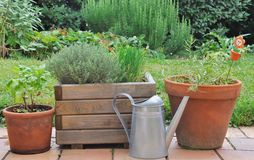 Different herbs in pots Stock Photo