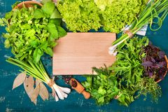 Different herbs salad, dill, parsley, coriander on a wooden background. Place for text. Stock Image