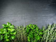 Different herbs on slate background. Photo of basil, rosemary, thyme, and parsley on a slate background stock photography