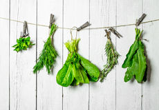 Different herbs on a string. On white wooden wall Royalty Free Stock Images