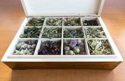 Different herbs in a wooden tea box. Different dried herbs in a wooden tea box stock photo