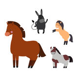 Different horses breed vector set. Royalty Free Stock Images