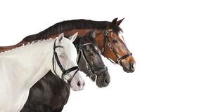 Different horses white collage Royalty Free Stock Image