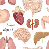 Different human organs set pattern Royalty Free Stock Image