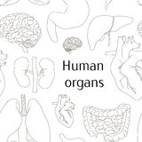 Different human organs set pattern Royalty Free Stock Images