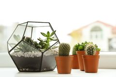 Free Different Indoor Plants On Window Sill Stock Photo - 154050430